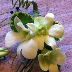 walnut_grove-floral_grad1
