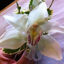 walnut_grove-floral_grad7