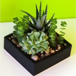 a-taste-of-succulents