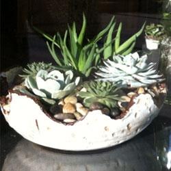 walnut_grove_floral_succulents5